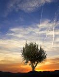 Un albero nelle montagne Fotografie Stock Libere da Diritti