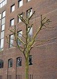 Un albero neo-potato in Bristol, Regno Unito fotografie stock