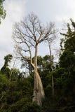 Un albero non ha foglie con gli alveari Fotografia Stock Libera da Diritti