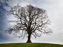 Un albero nudo solo Fotografia Stock