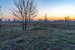 Un albero in un paesaggio di inverno durante l'alba fotografia stock