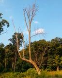 Un albero perfetto di imperfezione Fotografia Stock Libera da Diritti