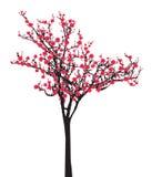 Un albero rosa di sakura della piena fioritura (fiore di ciliegia) su fondo bianco Fotografia Stock Libera da Diritti