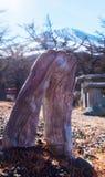 Un albero sconosciuto prima della montagna di FUJI Immagini Stock