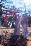 Un albero sconosciuto prima di rosso Torli di A Fotografie Stock Libere da Diritti
