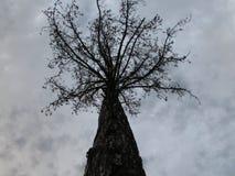 Un albero scuro in un ambiente scuro Immagini Stock