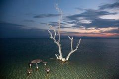 Un albero secco nel lago di Sevan Fotografia Stock Libera da Diritti
