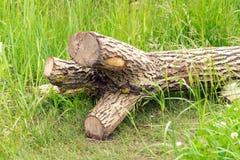 Un albero senza rami è sull'erba verde Tutti i rami Fotografia Stock