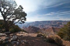 Un albero si siede sopra il Grand Canyon Fotografia Stock