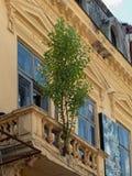 Un albero si sviluppa in una crepa nel balcone di una costruzione trascurata nel vecchio centro città a Bucarest, Romania Immagine Stock Libera da Diritti