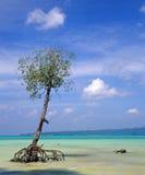 Un albero solo fotografia stock libera da diritti