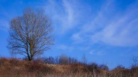 Un albero solo fotografie stock