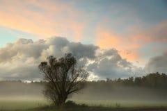 Un albero solo in un campo e con una foschia Fotografia Stock Libera da Diritti