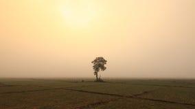 Un albero solo e campi della cipolla Fotografia Stock Libera da Diritti