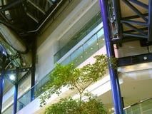 Un albero solo fra architettura contemporanea Fotografia Stock Libera da Diritti