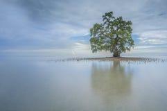 Un albero solo a Sabah Borneo Beach, Malesia Immagini Stock Libere da Diritti