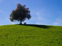 Un albero solo su un campo di erba e su un cielo blu Fotografie Stock