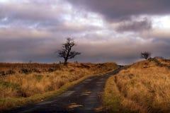 Un albero solo su un percorso del paese Immagini Stock Libere da Diritti