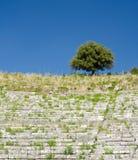 Un albero solo sull'orlo delle rovine antiche Fotografia Stock Libera da Diritti