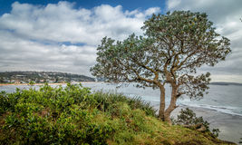 Un albero solo sulla costa Fotografia Stock