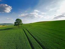 Un albero solo in un campo immagini stock libere da diritti