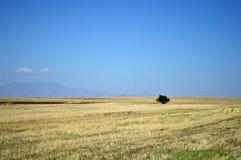 Un albero solo in un campo di grano Immagini Stock