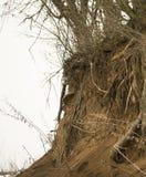 Un albero sopra un precipizio una scogliera Fotografie Stock Libere da Diritti