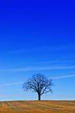 Un albero sotto un cielo blu Fotografia Stock