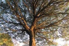 Un albero sparato da sotto fotografia stock