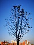 Un albero sta stando nella caduta fotografia stock