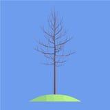 Un albero su fondo blu Fotografie Stock Libere da Diritti