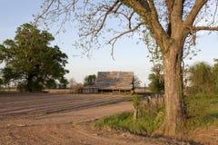 Un albero su un'azienda agricola, Mississippi Fotografia Stock