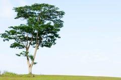 Un albero su una collina Fotografia Stock Libera da Diritti