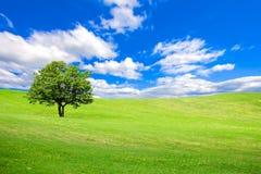 Un albero su una collina verde accesa sotto un cielo blu con le nuvole Immagini Stock Libere da Diritti