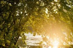 Un albero su una riva del lago al tramonto Fotografia Stock