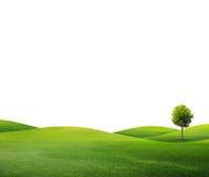 Un albero sul campo verde Fotografia Stock Libera da Diritti