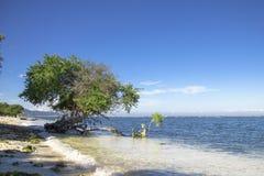Un albero sulla bella spiaggia immagini stock