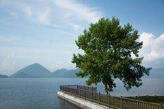 Un albero sulla riva del lago Fotografia Stock Libera da Diritti