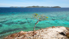 Un albero sulla scogliera sopra l'oceano fotografia stock
