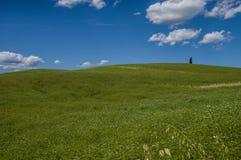 Un albero, Toscana Fotografia Stock Libera da Diritti