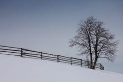 Un albero in un paesaggio di inverno con un piacevole Immagini Stock Libere da Diritti