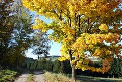 Un albero variopinto in autunno Fotografia Stock Libera da Diritti