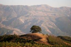 Un albero verde che cresce fra le montagne e le valli fotografia stock libera da diritti