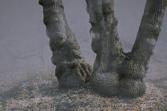 Un albero Warty vecchio nella nebbia immagini stock