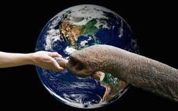 Un aliment de alimentation de main à l'éléphant avec la terre, y compris des éléments Photographie stock