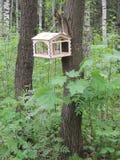 Un alimentador del pájaro en el árbol Imagen de archivo