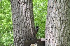 Un alimentatore dell'uccello fra gli alberi immagine stock libera da diritti