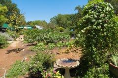 Un alimentatore dell'uccello si è accoccolato fra un giardino occupato fotografia stock libera da diritti