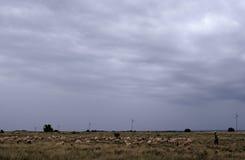 Un allevamento, Sudafrica. Immagine Stock