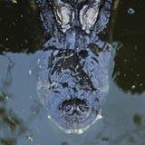 Un alligatore si apposta appena sotto la superficie Immagini Stock